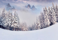Foggy winter morning in mountains Royalty Free Stock Photography