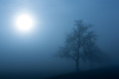 Foggy winter morning. Silhouette of a tree on a foggy winter morning Stock Photography