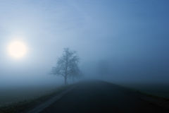 Foggy winter morning. Silhouette of trees along the road on a foggy winter morning Stock Images
