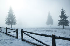 Foggy winter Stock Photography
