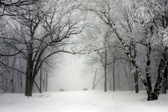 Free Foggy Winter Park Royalty Free Stock Images - 12611369