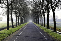 Foggy winter road. Foggy road with trees in a rural winter landscape Stock Image