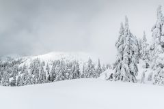 Foggy winter scene in the backcountry stock photos