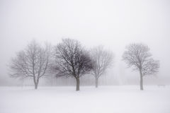 Winter trees in fog Royalty Free Stock Photo
