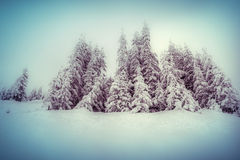 Foggy winter scene in the mountain forest. Royalty Free Stock Photography