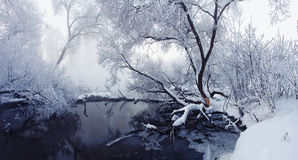 Frozen nature. Trees with snow Royalty Free Stock Photo