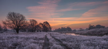 Winter coming. Frozen grass Royalty Free Stock Image