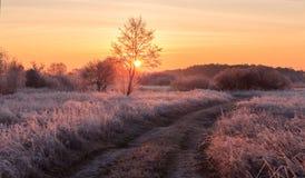 Frozen sunrise. Frozen field Royalty Free Stock Image