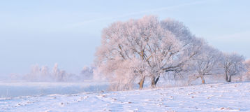 Frozen trees. Field with snow Stock Photos