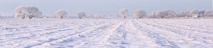 Frozen fields. Trees with snow Royalty Free Stock Images