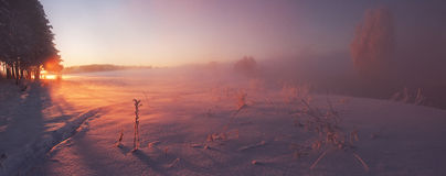Morning sunlight. Strong winter frost Stock Photo