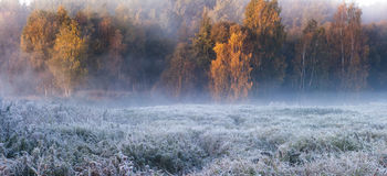 Ice and fire. Frozen grass and trees Royalty Free Stock Photography