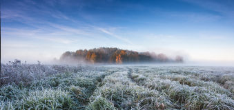 Frozen valley. Frozen grass and trees Stock Photography