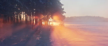 Foggy winter sunrise. This is a cold and foggy winter sunrise with frost grass and trees Royalty Free Stock Photo