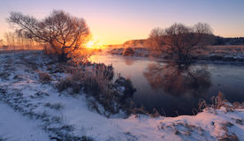 Winter light. Tree with snow Royalty Free Stock Images