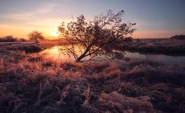 Winter sun. Frozen grass and trees Stock Photo