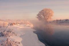 Frozen tree. Winter sunrise Stock Photos