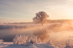 Colorful sunlight. Winter on a river Stock Images