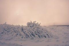 Frozen grass. Grass under snow Stock Photos