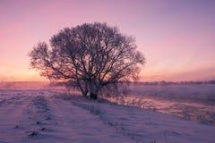 Misty winter sunrise. Snow on field Stock Images