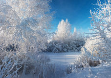 Frozen forest. Trees under the snow Royalty Free Stock Images