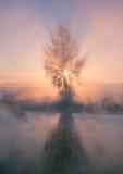 Foggy winter sunrise Royalty Free Stock Image
