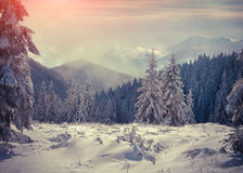 Foggy winter sunrise in mountains. Royalty Free Stock Photos