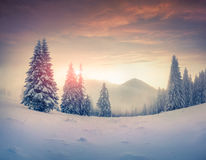 Foggy winter sunrise in the mountains Royalty Free Stock Images