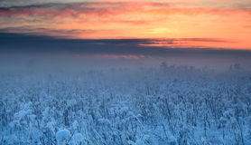 Foggy winter sunset Stock Image