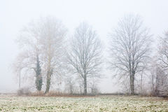 Foggy Winter Trees Stock Photos