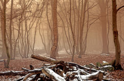 Foggy Winter Woodland Stock Photography