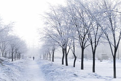 Foggy wintry morning in Saint-Petersburg (Russia) Royalty Free Stock Images