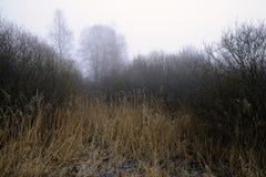 Foggy wood Royalty Free Stock Photo