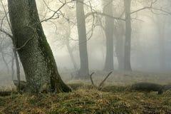 Foggy wood Stock Image