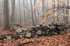 Foggy Woodland Landscape Stock Photography