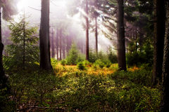 Foggy woods 4 Stock Photo