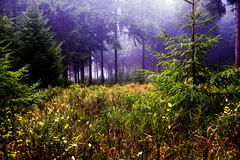 Foggy woods Royalty Free Stock Images