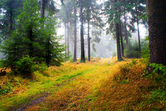 Foggy woods Stock Photography
