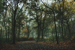 Foggy Woods with Autumn path Stock Image