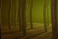 Foggy Woods. 3 D render of foggy woods Stock Image