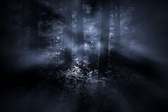Foggy woods at dawn royalty free stock image