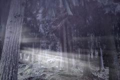 Foggy woods at dusk royalty free stock photo