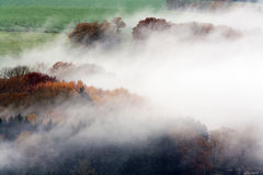 Foggy woods and fields Stock Images