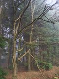 Foggy woods Royalty Free Stock Photos