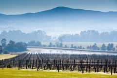 Foggy Yarra Valley During Winter Royalty Free Stock Photos