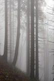 FoggyForest Στοκ φωτογραφίες με δικαίωμα ελεύθερης χρήσης