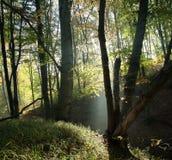 Foggyy forest Royalty Free Stock Photo