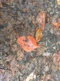 Fogli arancioni immagine stock