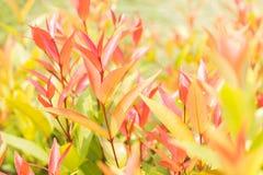 Fogli arancioni Fotografia Stock Libera da Diritti