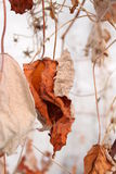 Fogli arancioni Immagini Stock Libere da Diritti
